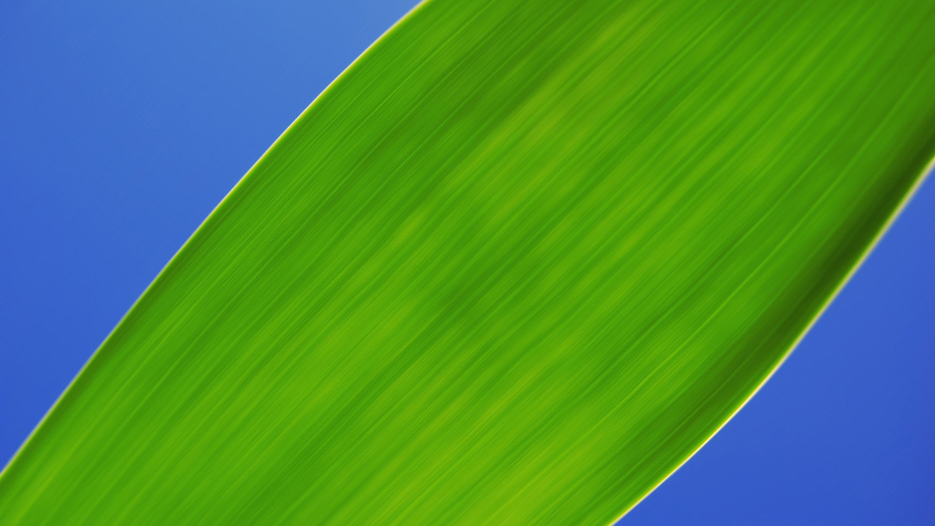 Green Leaf - Up Close Wallpapers