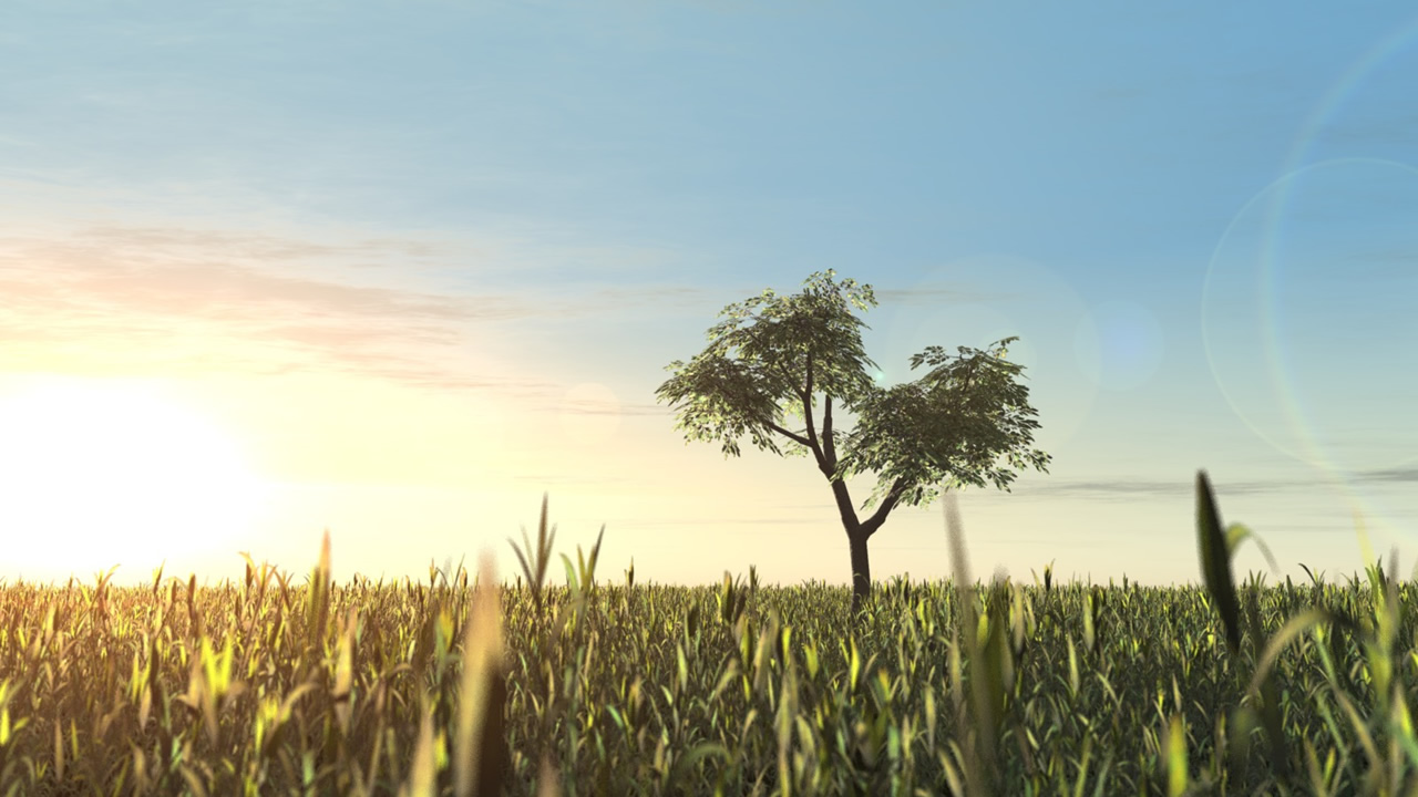 Lonely Tree Wallpapers