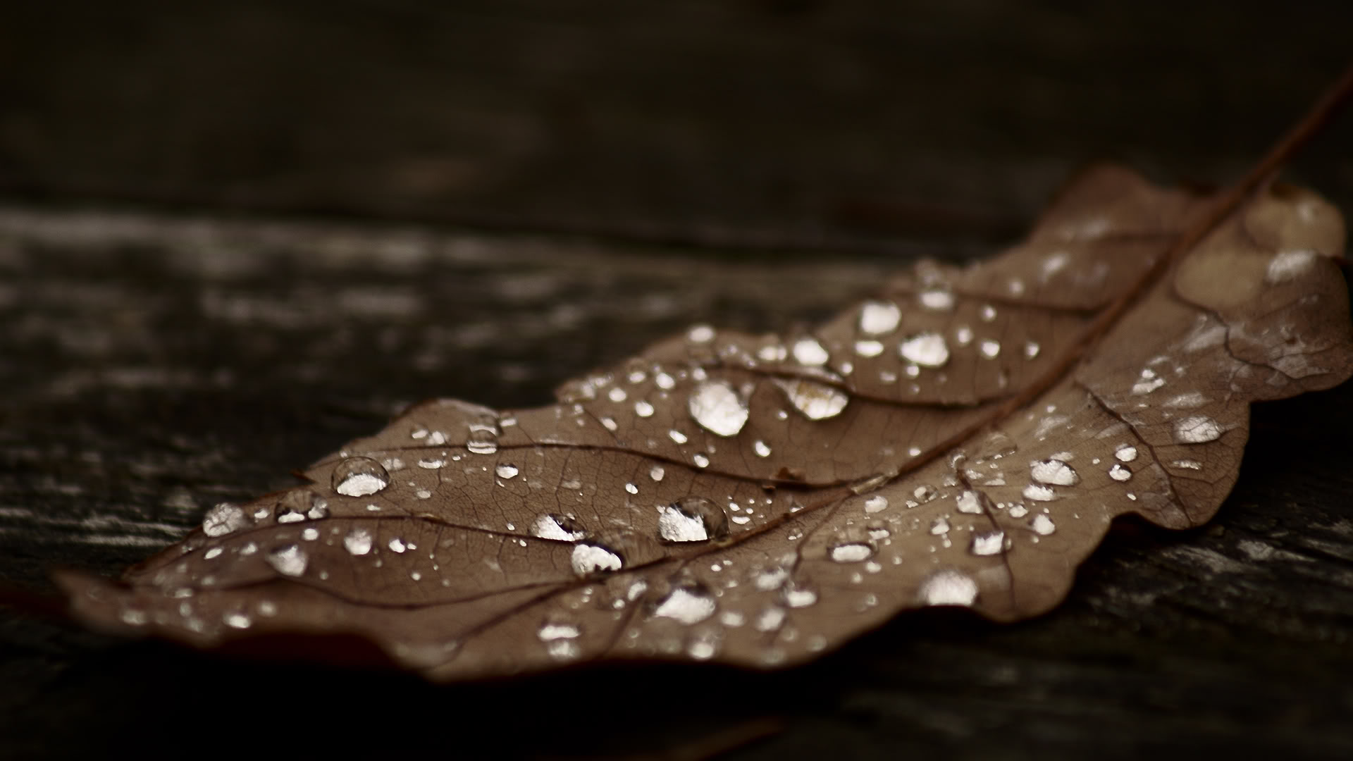 Rain Collects on Leaf Wallpapers