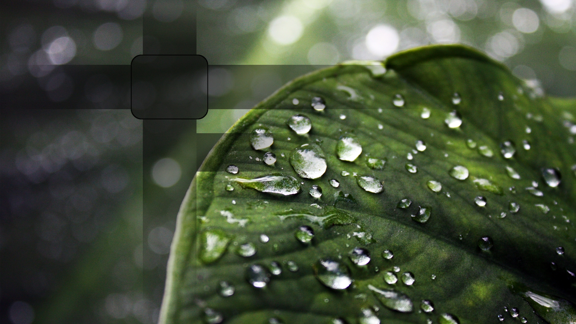 Rain Drops on Leaf Wallpapers