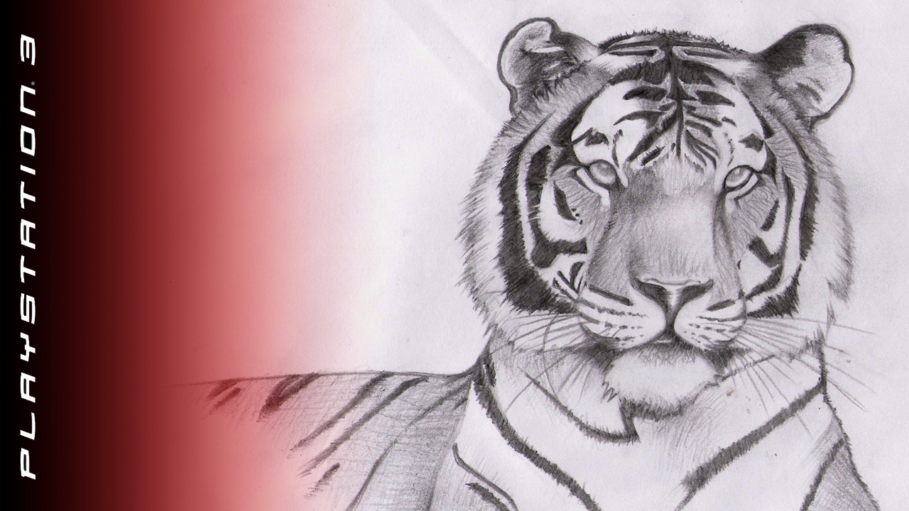 Tiger Drawing Wallpapers
