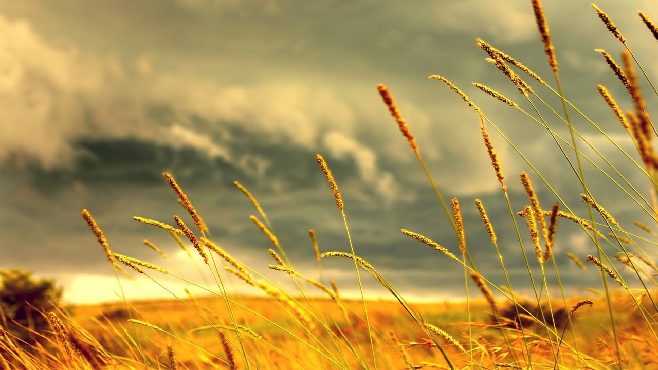 View of Wheat Wallpapers