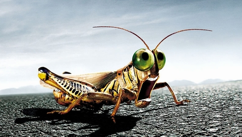 Crying Grasshopper Wallpapers